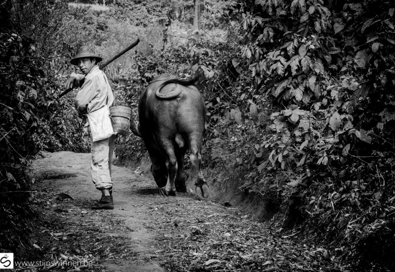 famer and bull in near Hsipaw