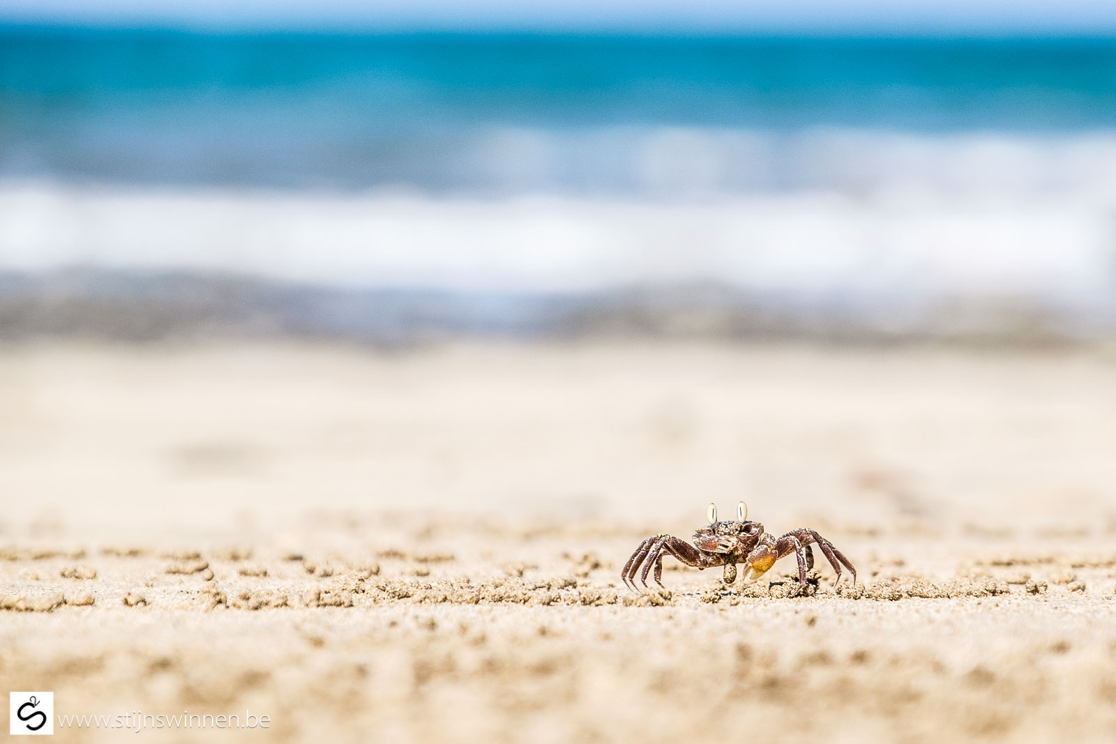 little crab on the beach