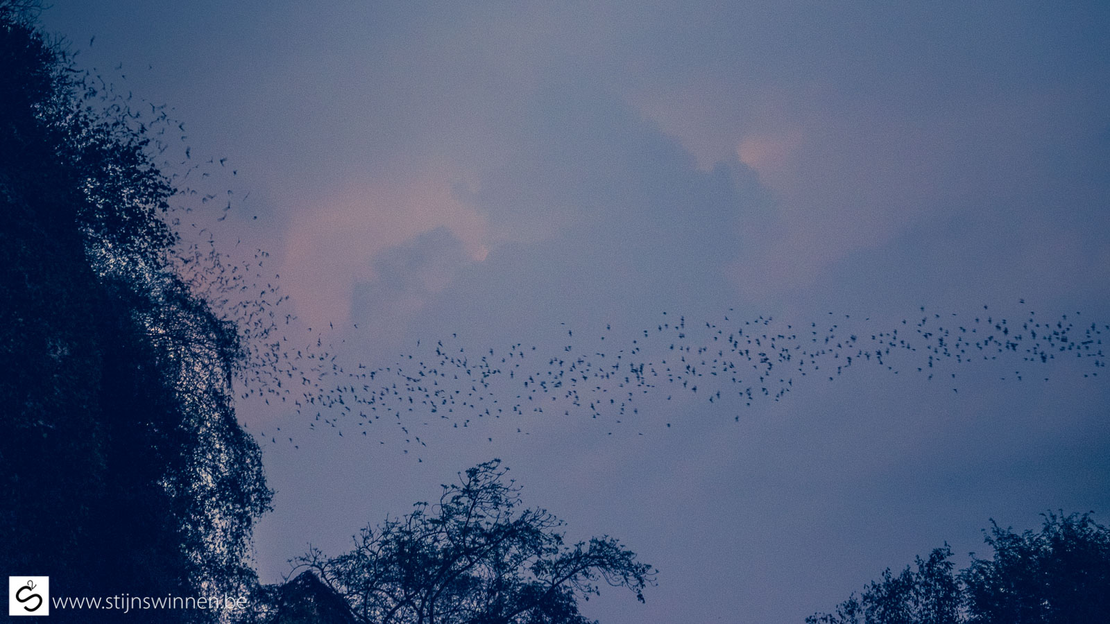 BATtambang - What you see are bats