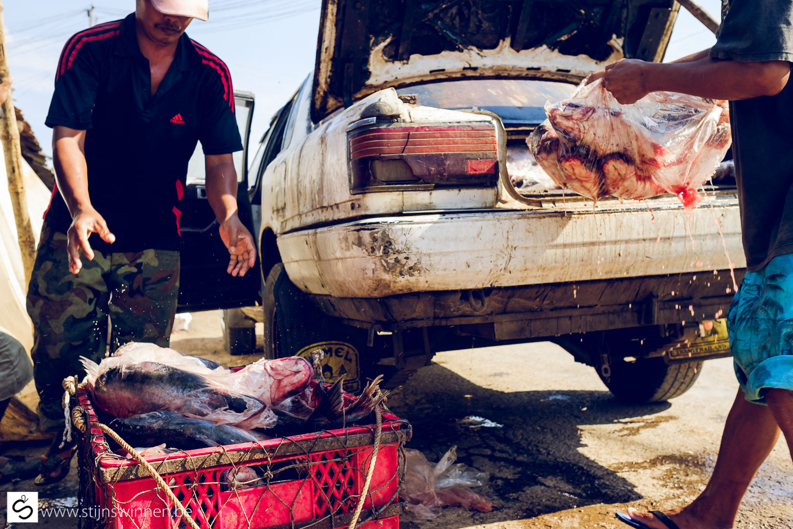 Unloading fish out of car